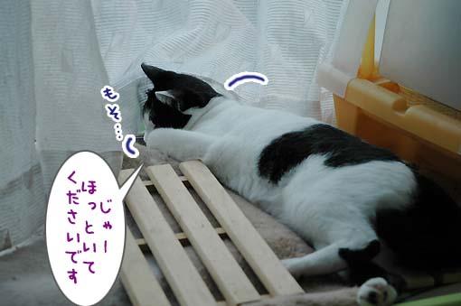 04_20090716030124.jpg