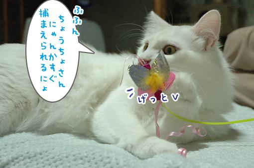 04_20090731000320.jpg
