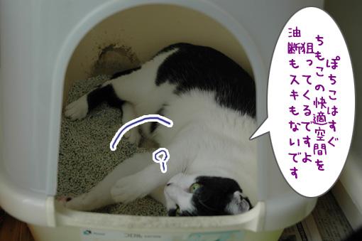 04_20090808012521.jpg