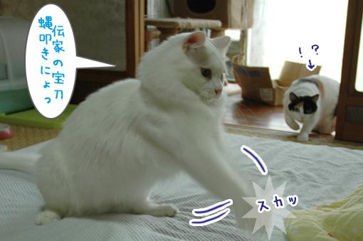 04_20090812150228.jpg
