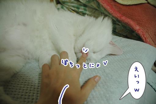 04_20090815225826.jpg
