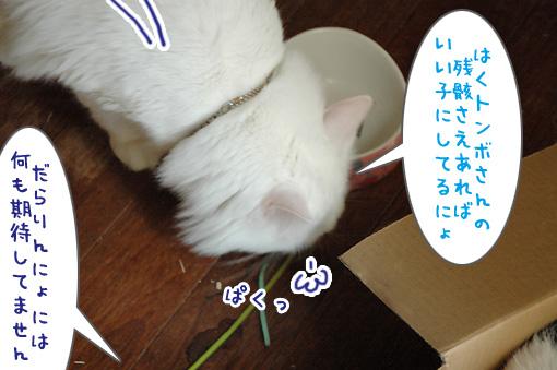 04_20090818234741.jpg