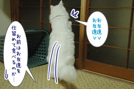 04_20090821015241.jpg