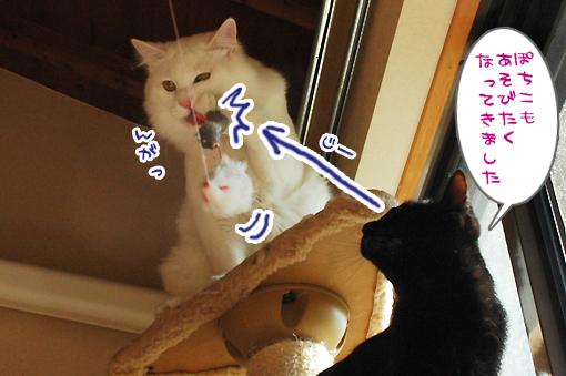 05_20090129164403.jpg