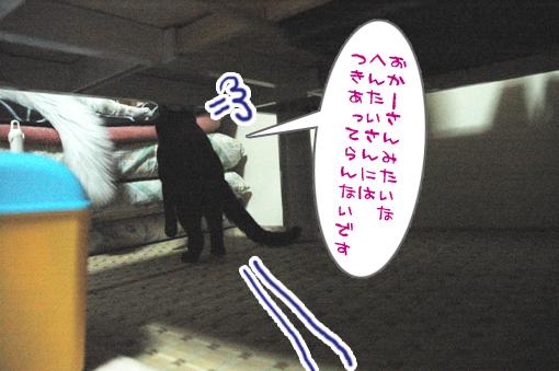 05_20090205004937.jpg