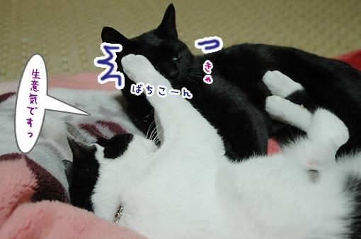 05_20090306180525.jpg