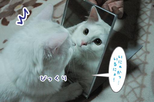 05_20090314013016.jpg