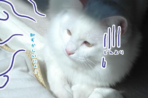05_20090324003434.jpg
