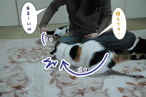 05_20090408005049.jpg