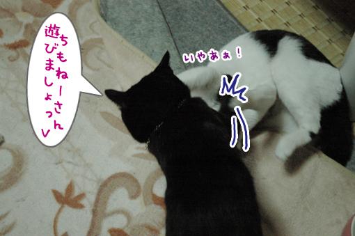 05_20090509000510.jpg