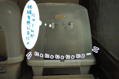 05_20090523025302.jpg