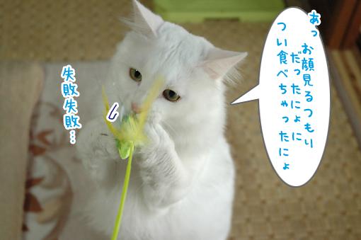 05_20090615233139.jpg