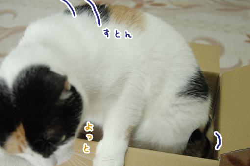 05_20090621213611.jpg