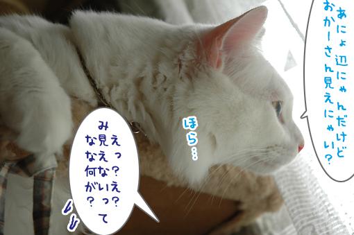 05_20090703003833.jpg