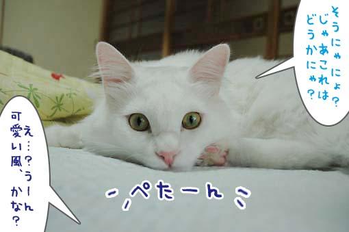 05_20090710170838.jpg