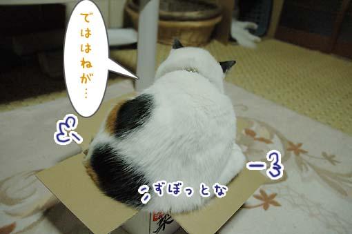 05_20090718001158.jpg