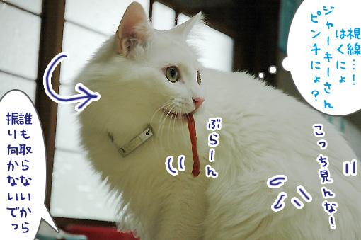 05_20090726211838.jpg