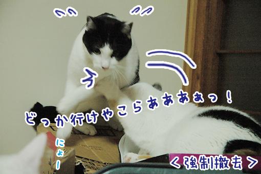 05_20090802231640.jpg