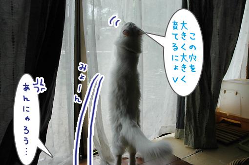 05_20090811182315.jpg
