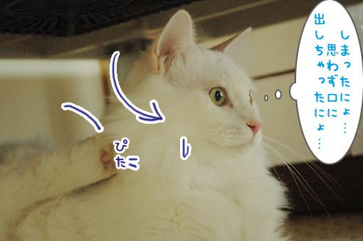 05_20090817230723.jpg