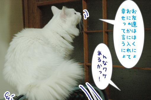 05_20090821015241.jpg