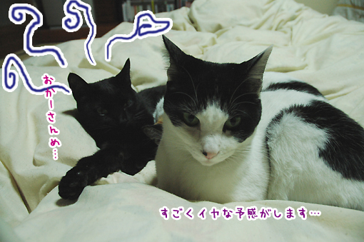 06_20090126004419.jpg