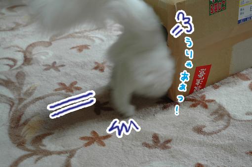 06_20090222232603.jpg