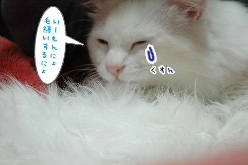 06_20090302184637.jpg