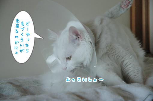 06_20090419022740.jpg