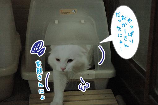 06_20090523025302.jpg