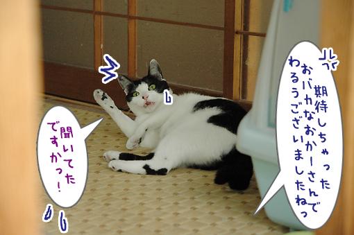 06_20090603212051.jpg