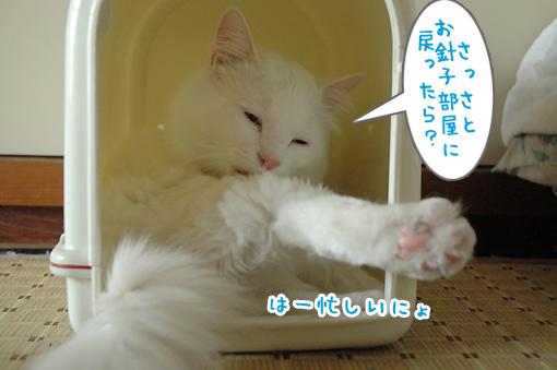 06_20090608002752.jpg