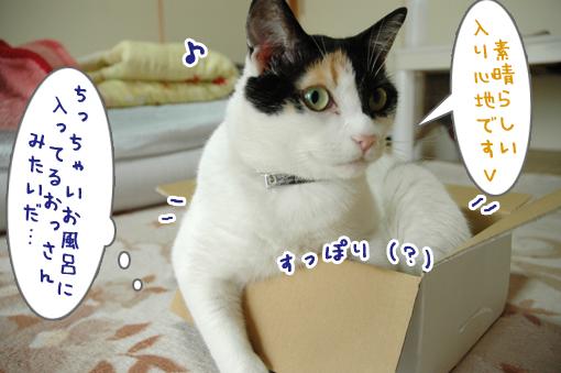 06_20090621213534.jpg