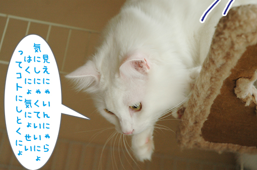 06_20090702230638.jpg
