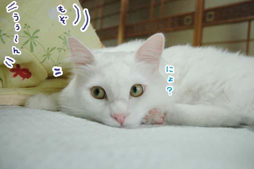 06_20090710170838.jpg