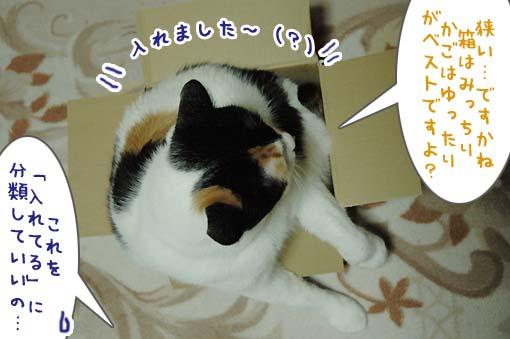 06_20090718001158.jpg