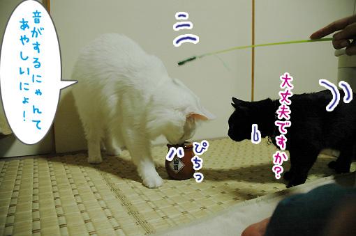 06_20090823233051.jpg