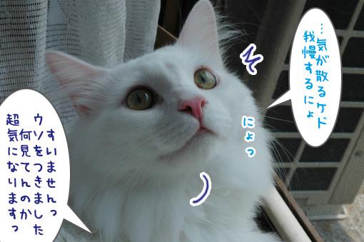 06_20090828231203.jpg