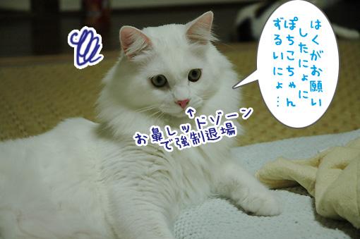 06_20090911002349.jpg