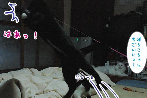 07_20090211032051.jpg