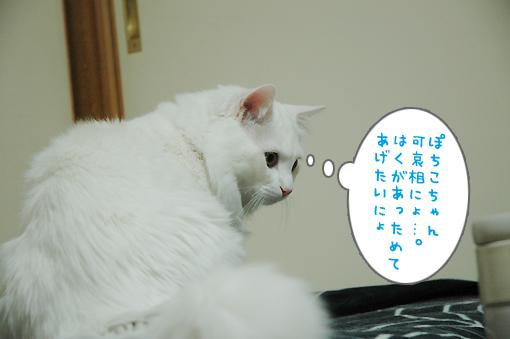 07_20090303234730.jpg