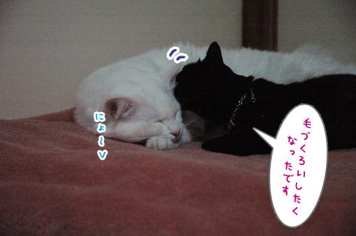 07_20090326032546.jpg
