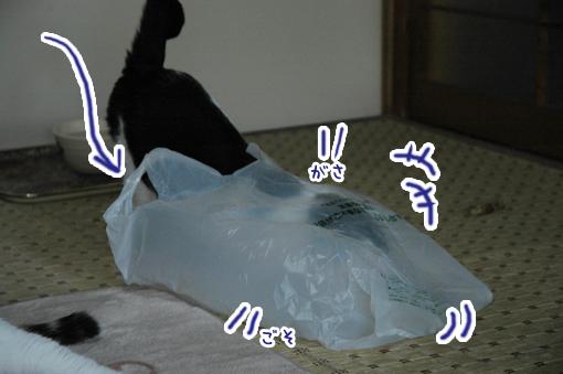 07_20090421012723.jpg