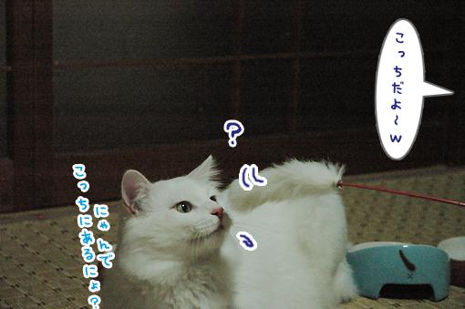 07_20090424002027.jpg