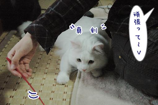 07_20090505211133.jpg