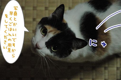 07_20090519214436.jpg