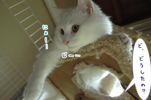 07_20090522001920.jpg