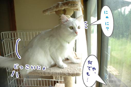 07_20090531001132.jpg