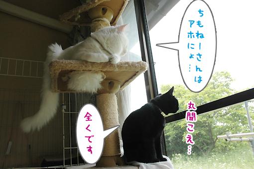 07_20090603212051.jpg
