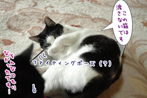 07_20090611232326.jpg